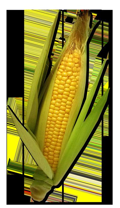 Maïs / Blé d'inde